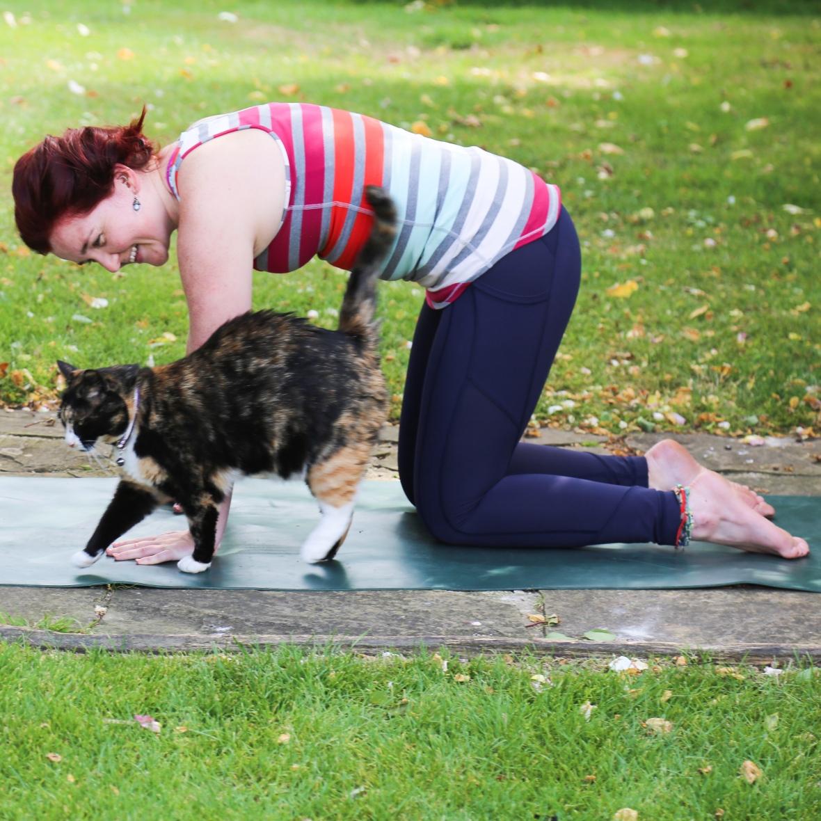 Cat-cow pose, tortoiseshell cat