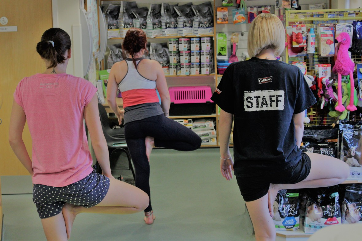 Yoga poses in a vet clinic