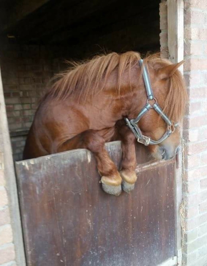 Horse neck stretch